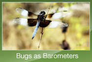 Bugs as Barometers