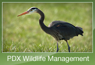PDX Wildlife Management